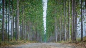 Долгий путь природы Стоковые Фотографии RF