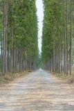 Долгий путь природы Стоковое Изображение RF