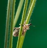 Долгоносик в траве Стоковая Фотография RF
