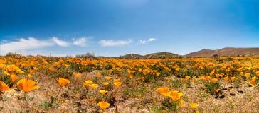 Долина антилопы Стоковые Фото