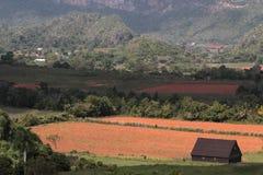 Долина ландшафта Vinales Стоковые Изображения