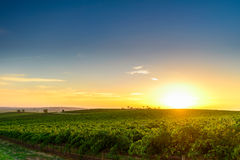 Долина вина Стоковые Фото