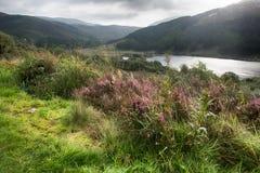 Долина в Galloway Forest Park стоковое изображение rf