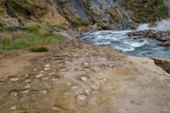 Долина гейзеров Следы медведя kamchatka Стоковое Изображение RF