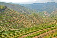Долина Дуэро: Виноградники около реки Duero и Pinhao, Португалии Стоковые Фото