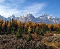 Долина лиственницы Стоковые Фотографии RF