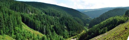 Долина и лес Стоковая Фотография