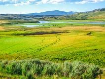 Долина Йеллоустон Hayden стоковая фотография rf