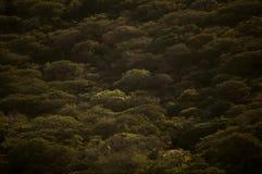 Долина ниже, Никарагуа Стоковое Изображение