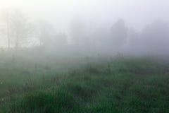 Долина при силуэты зеленой травы и деревьев покрытые с туманом Стоковое Изображение
