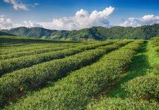 Долина плантации чая на голубом облачном небе Стоковые Изображения RF