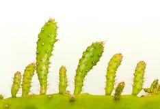 Долина стержня кактуса Стоковые Фото