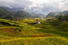 Долина с rive рисовые поля Стоковые Фото