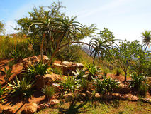 Долина тысячи холмов. Kwazulu Natal. Республика юга a Стоковые Фотографии RF