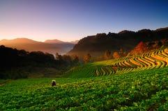 Долина Ang Khang в северном Таиланде стоковые фотографии rf