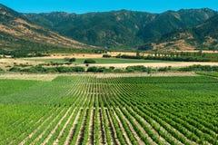 Долина Colchagua стоковое изображение rf