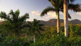 Долина de Vinales, Pinar del Rio, Куба видеоматериал
