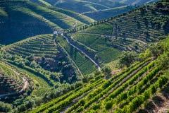 Долина Duoro Стоковое фото RF