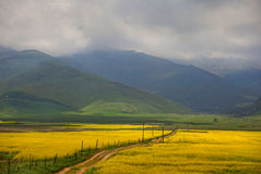 Долина flowers-7907 Стоковая Фотография