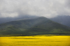 Долина flowers-7907 Стоковое фото RF