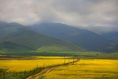 Долина flowers-7907 стоковое изображение rf