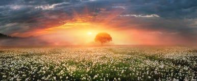 Долина Narcissus Стоковая Фотография