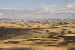 Долина Palouse, восточный штат Вашингтон Стоковое Фото