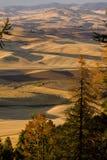 Долина Palouse, восточный штат Вашингтон Стоковая Фотография RF