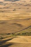 Долина Palouse, восточный штат Вашингтон Стоковое Изображение