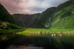 Долина Waimanu Стоковое Фото