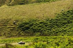 Долина Wasdale, Cumbria, Англия Великобритания Стоковое Изображение RF