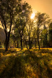 Долина Yosemite луга Стоковая Фотография
