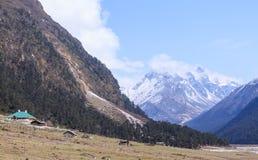 Долина Yumthang, северный Сикким, Индия Стоковые Изображения