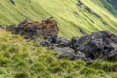 Доломиты 21 Стоковая Фотография RF