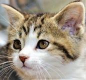 Драгоценный котенок tabby стоковые изображения rf