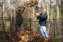 Драка листьев стоковые изображения