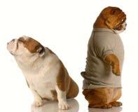 драка собаки стоковые фото