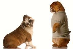 драка собаки стоковые изображения rf