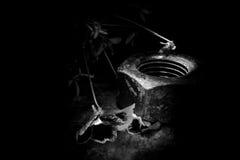 драка Стоковая Фотография RF