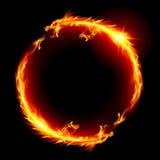 драконы Стоковые Фото
