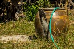 Дракон испек глину, траву, гольф, outdoors Стоковая Фотография RF