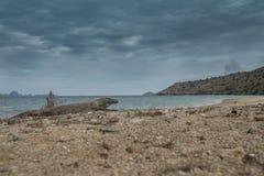 Дракон на пляже Стоковые Фотографии RF