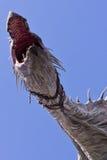 Дракон Diagon AlleyСтоковое Изображение RF