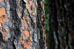 Драматическая деревенская кора дерева Стоковые Изображения
