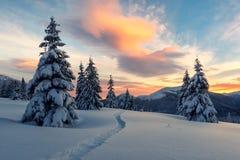 Драматическая зимняя сцена с снежными деревьями Стоковая Фотография RF