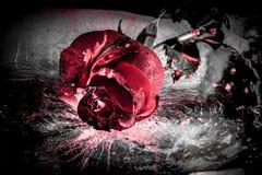 Драматическая красная роза Стоковые Изображения