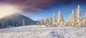 Драматическая панорама зимы прикарпатских гор с крышкой снега Стоковые Изображения RF