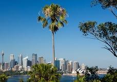 Драматическая панорамная гавань Сиднея фото стоковые изображения rf