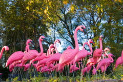 драматическая поддельная пуща стаи фламингоа Стоковые Фотографии RF