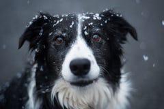 Драматическая собака под снегом стоковое изображение rf